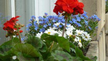 edgar flower boxes