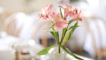 edgar pink flowers 2
