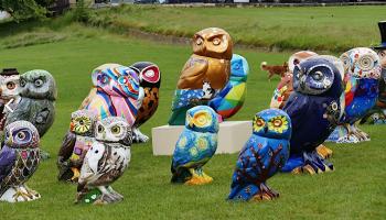 minerva owls landed