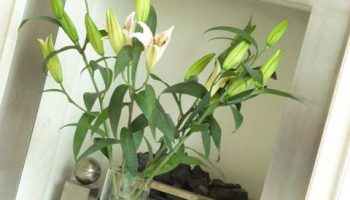 bath west flowers