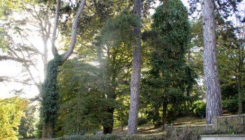hedgemead park trees