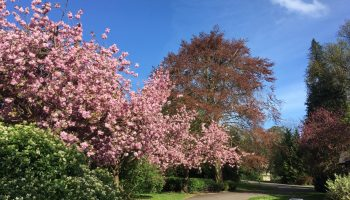 spring events in sydney gardens